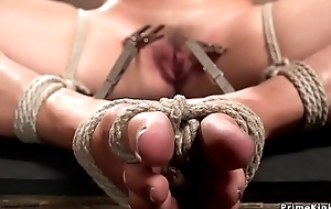 Hogtied pet clamped with apparel pins
